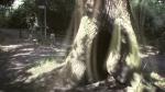 urban nature - tree green chain walk london